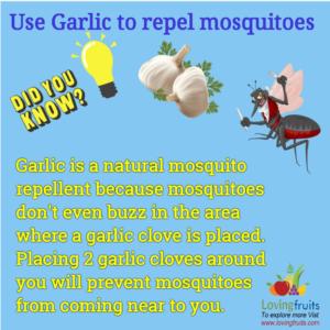 garlic mosquito barrier