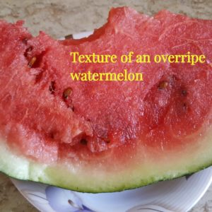 How Can You Tell If a Watermelon Has Gone Bad?